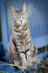 Katze, Cat, Katzenbilder, Katzenfoto, Katzenfotograf