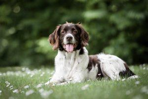 Hundefotograf, Tierfotografie, Tierfoto, Hundefoto, Hund