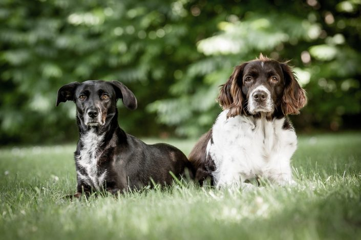 Tierfotografie, Tierfoto, Hundefoto, Dog, Hund