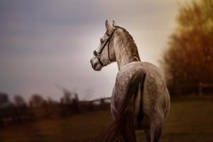 Tierfotografie-Preise-Pferde